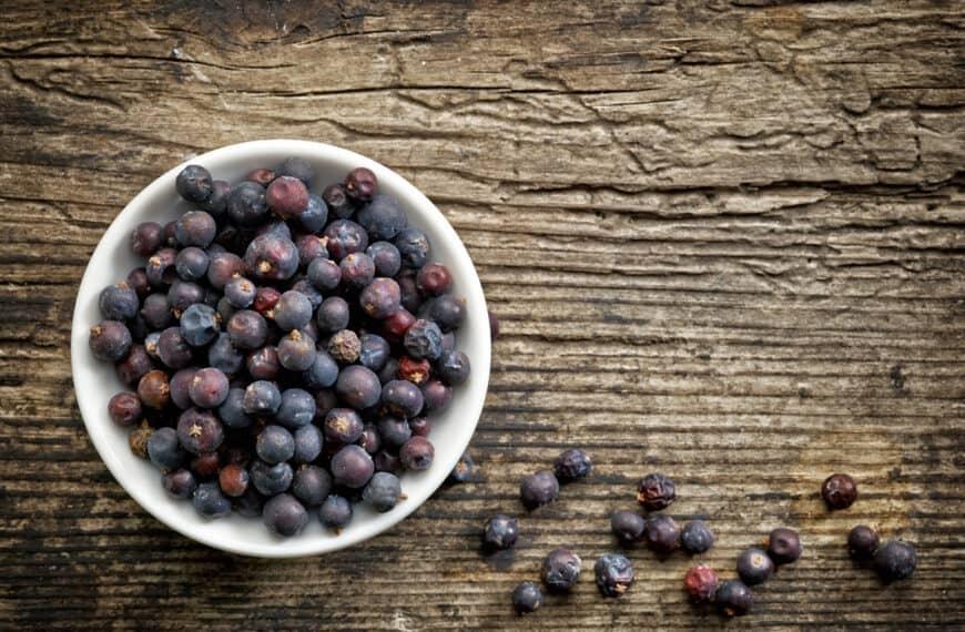 Juniper: the magic berry